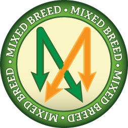Mixed Breed Icon
