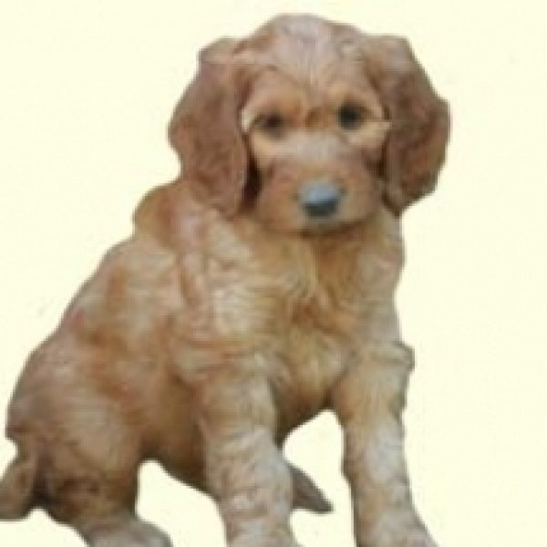Irish Doodle Puppies For Sale In DE MD NY NJ Philly DC and Baltimore