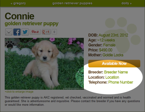 You can email us at info greenfieldpuppies com or fill out the form