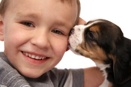 Greenfield Puppies on Welcome Back To The Greenfield Puppies Dog Blog Making A Decision On