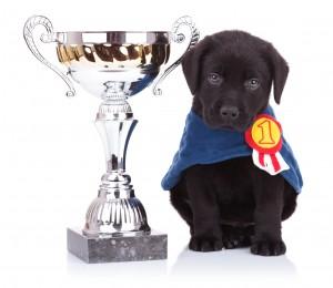Top 10 Popular Dog Breeds 2013