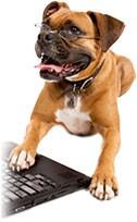 Puppy dog on a laptop